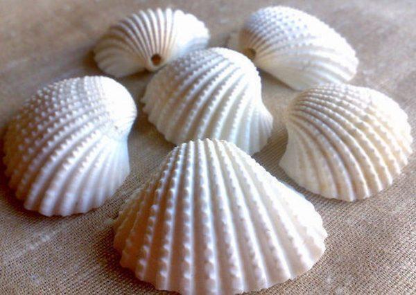 Large Natural Scallop Sea Shells