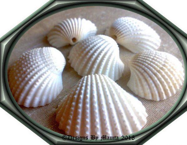 Sea Shells For Beach Decor